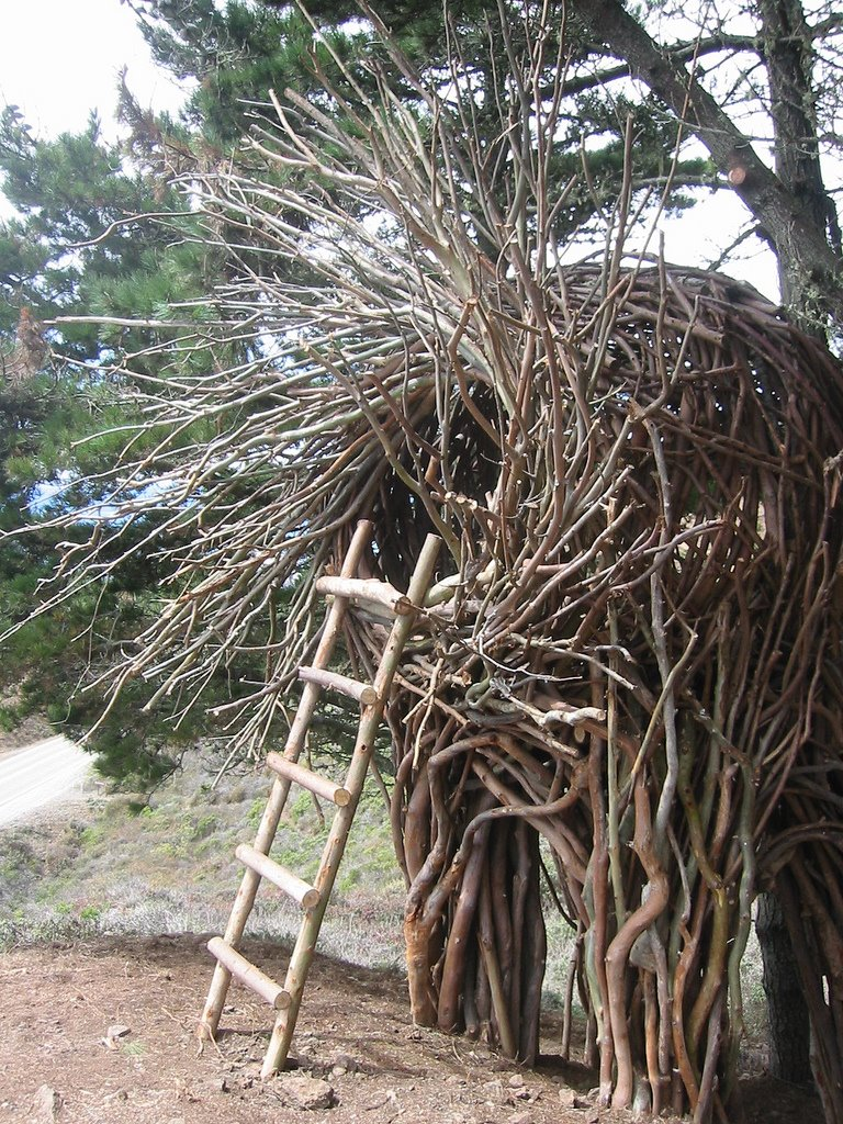 one little piggy made his house from sticks u2026crazy tree